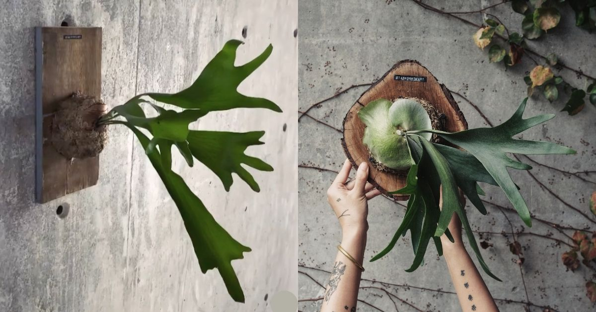 Losing his landed home was the catalyst for kickstarting this Malaysian's fern decor biz